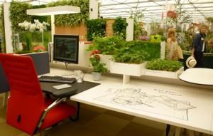 desk-plants