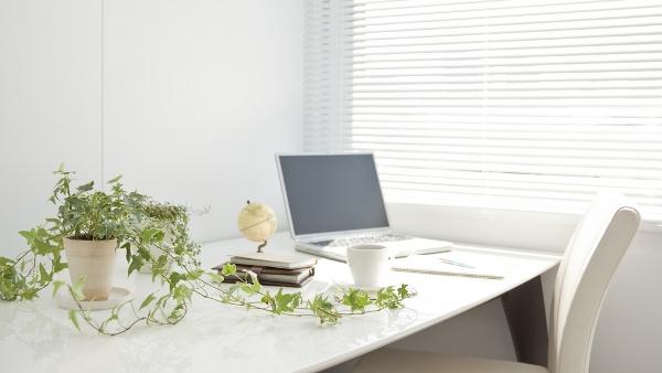 5 Beneficios de Tener una Planta en elEscritorio