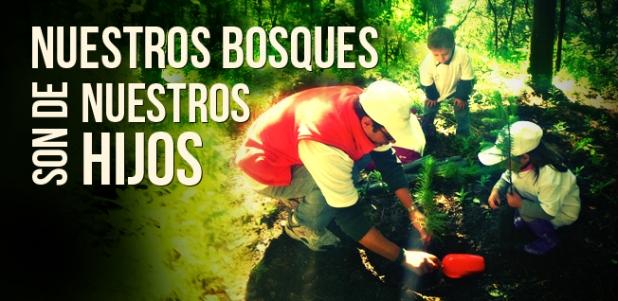 Importancia de los bosques en laTierra
