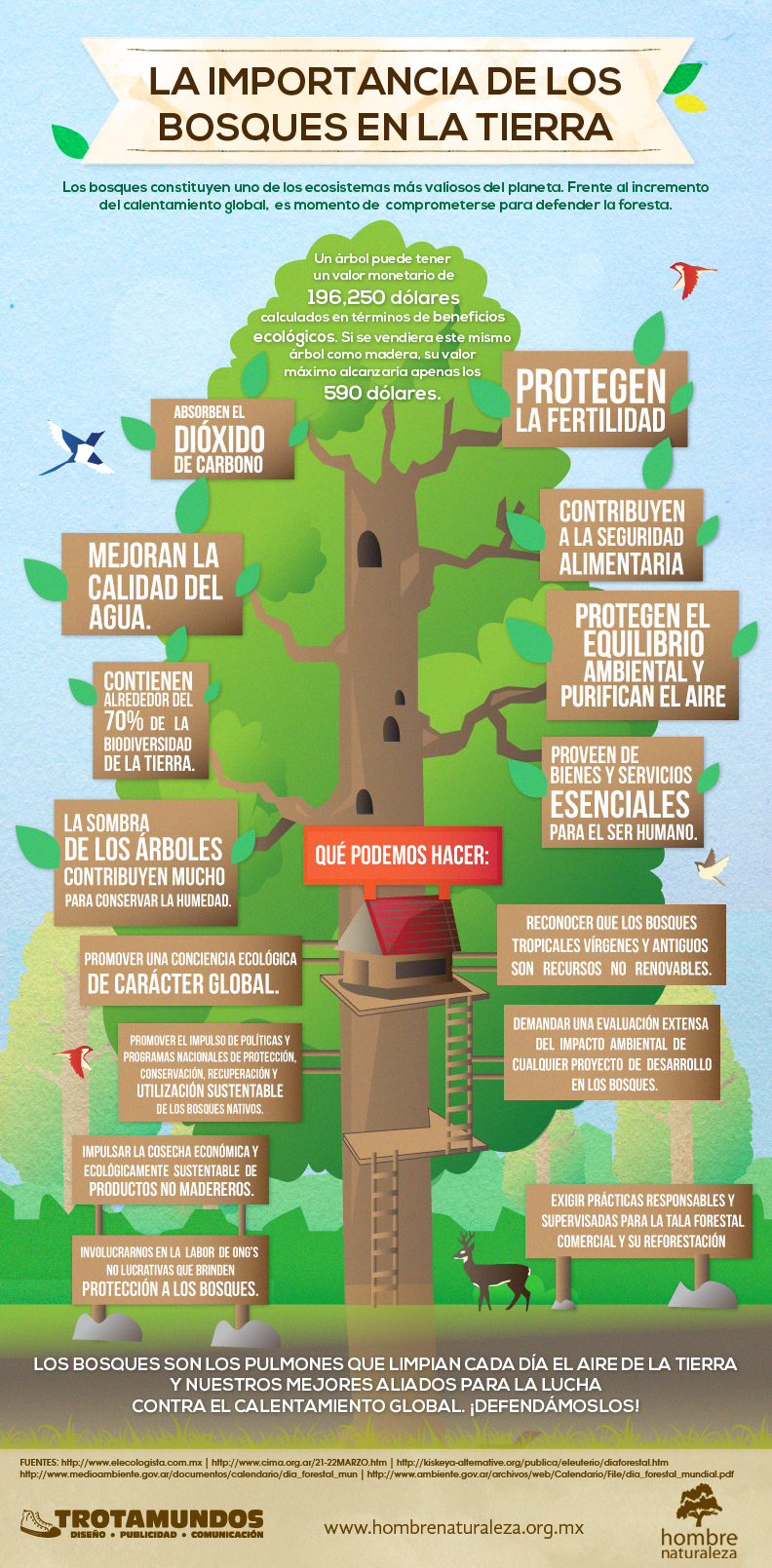 Importancia de los bosques en la Tierra  Estilo Verde