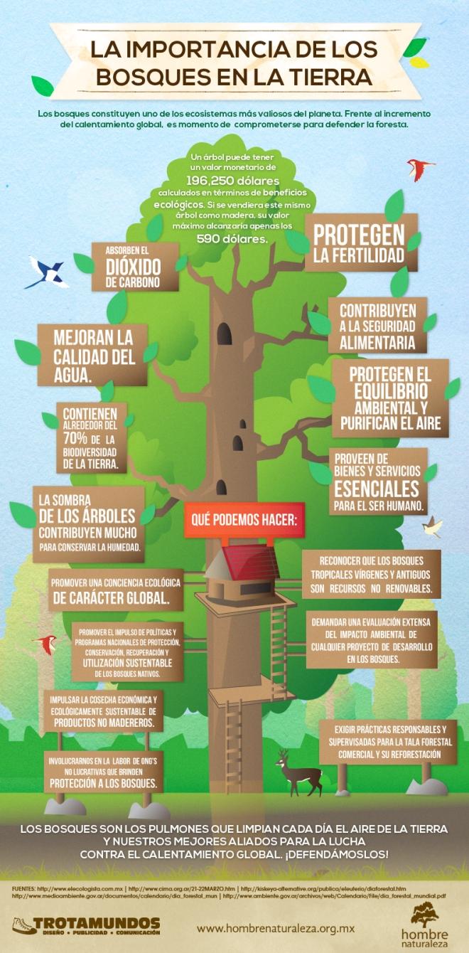 Importancia de los bosques Infografia
