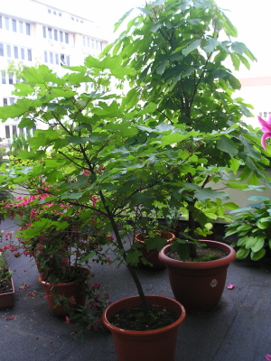 trasplantar árbol y arbustos – estilo verde