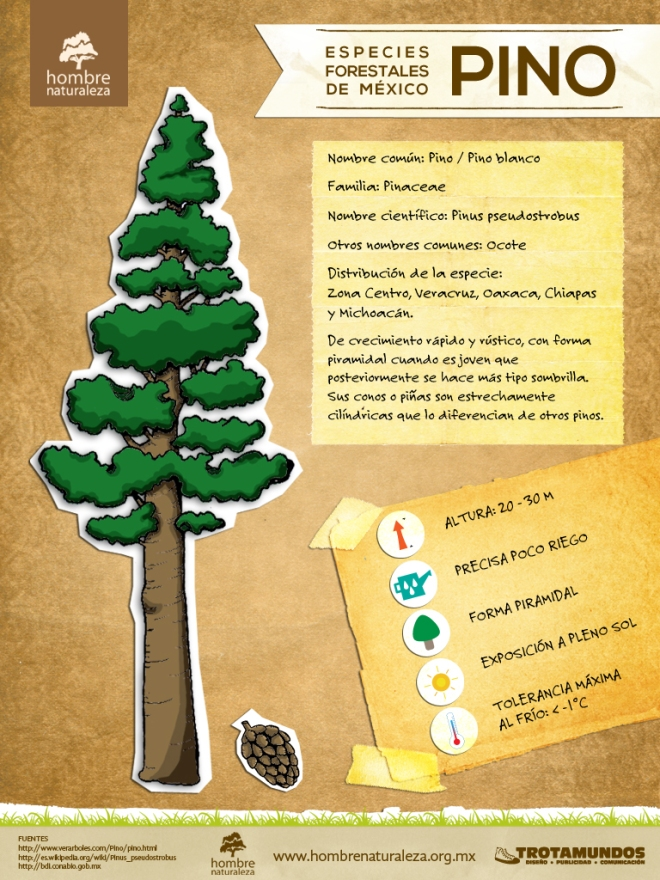 infografc3ada pino - Campaña Siembra Vida 2013