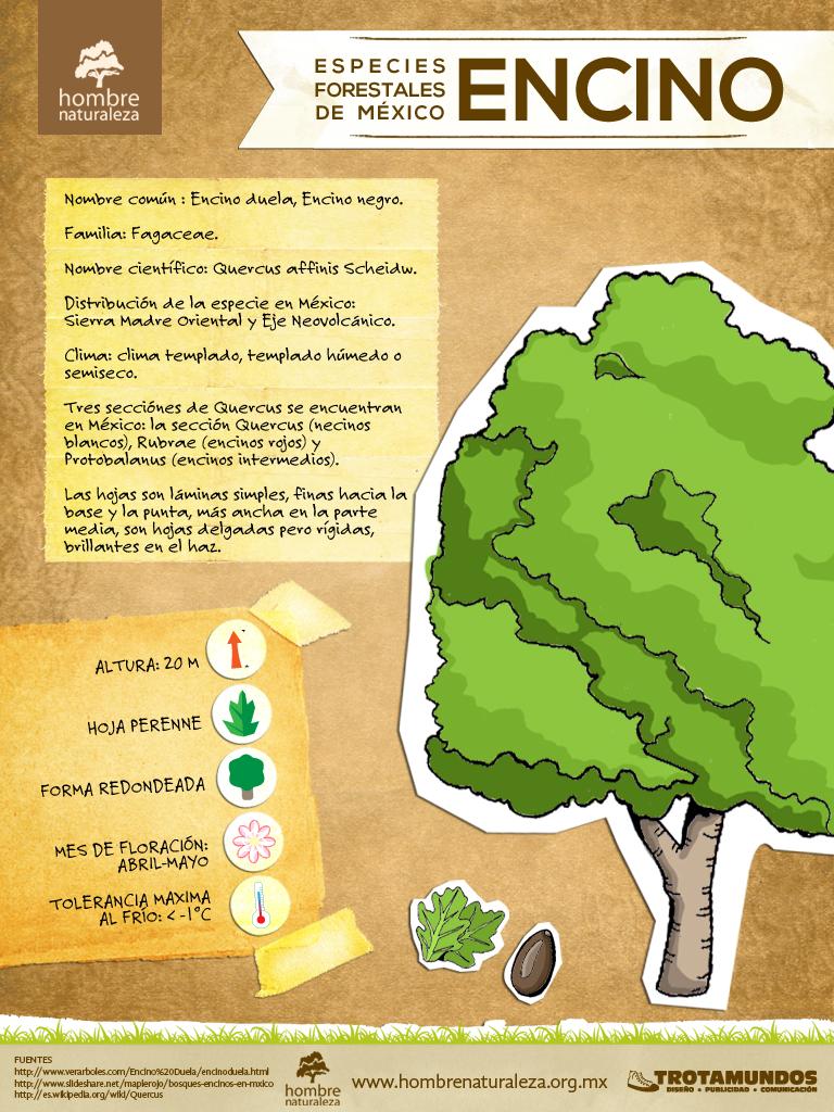 Infograf as estilo verde for Importancia de los viveros forestales