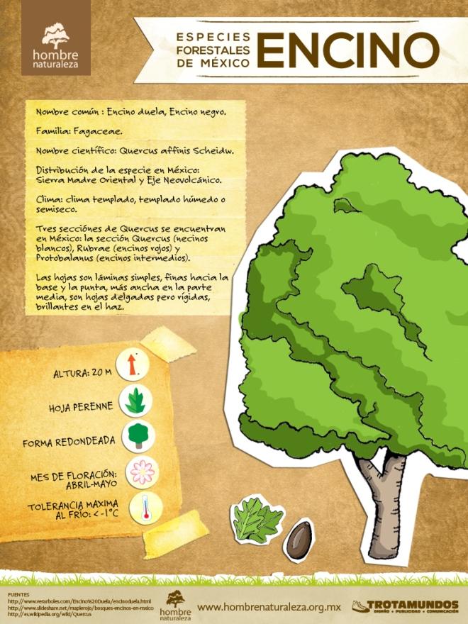 infografia encino - Campaña Siembra Vida 2013