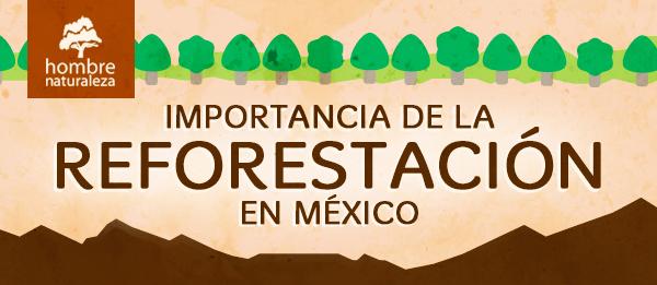 Conoce la Importancia de la Reforestación enMéxico